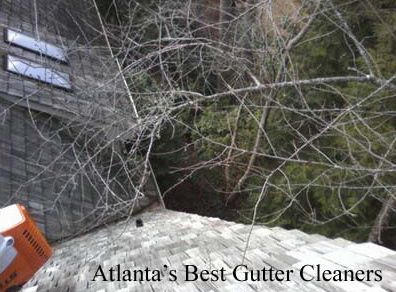Canton's Best Gutter Cleaners Before and After Tree Pruning