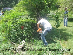 Canton's Best Gutter Cleaners does tree pruning of limbs coming in range of the gutters.